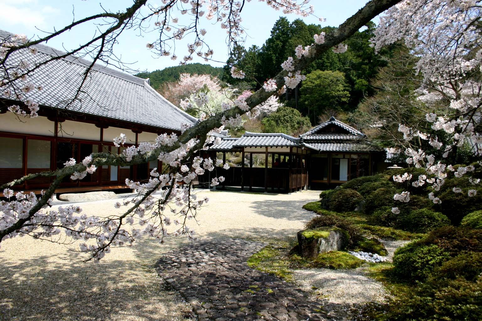 60弘川寺の桜