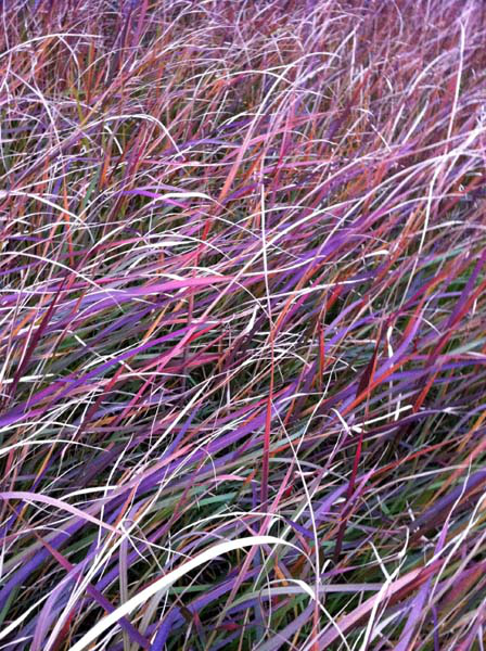 096coloring-dry-grass