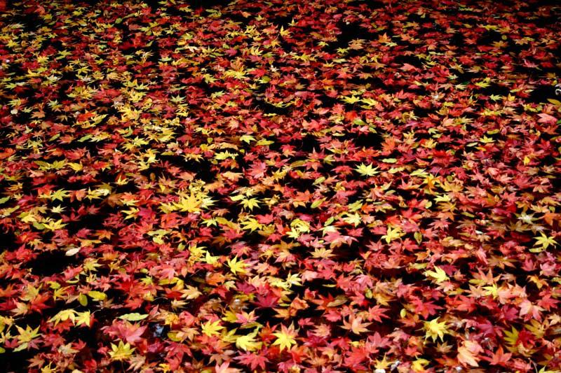 097etude_of_fallen-leaves